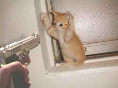 cat-robbery.jpg