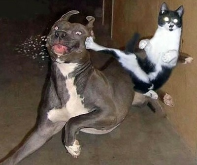 cat_kick.jpg