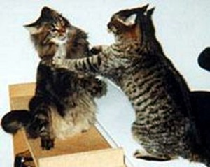 2858-cat_fight-serious_cat_fight__red.jpg