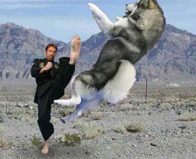 kick-dog.jpg