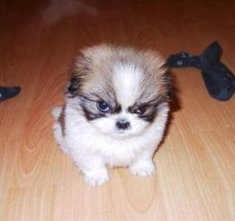angrydog.jpg