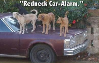 redneck8.jpg